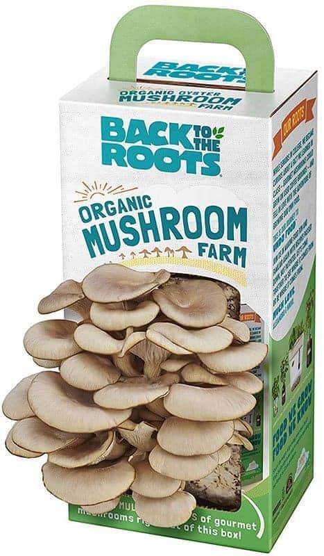 Mushroom Kit