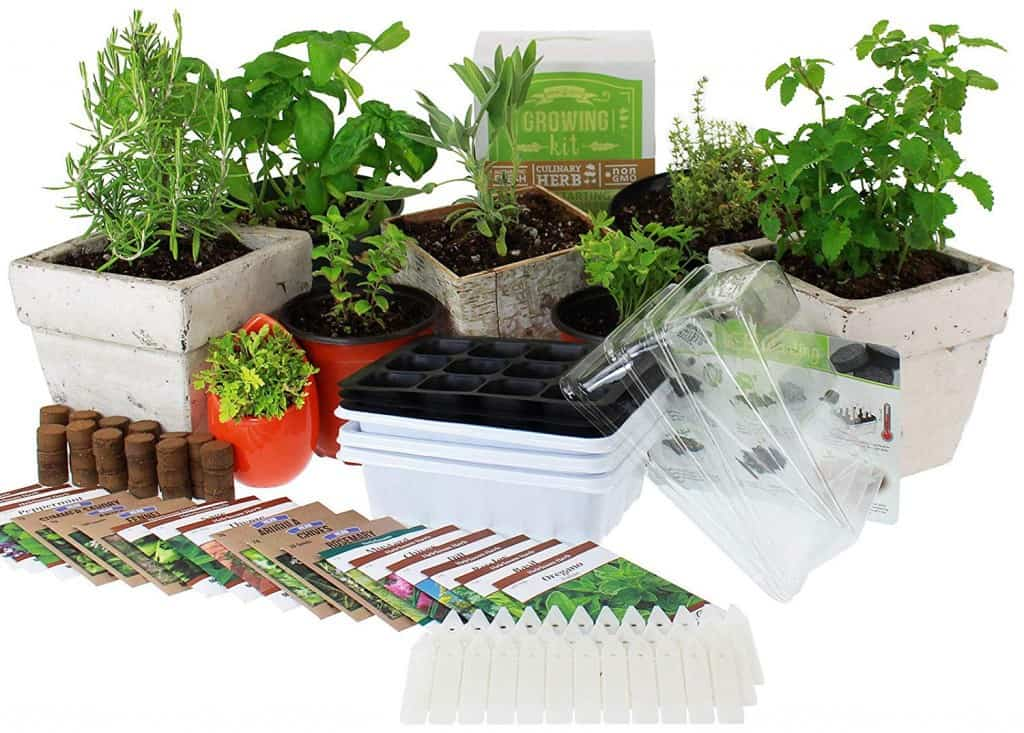 Culinary Indoor Herb Garden Kit