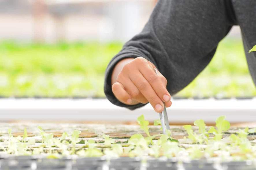 What are Hydroponic Nutrients and Why Do You Need Them?