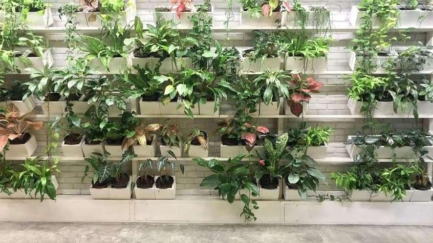 How to Grow an Indoor Vertical Garden