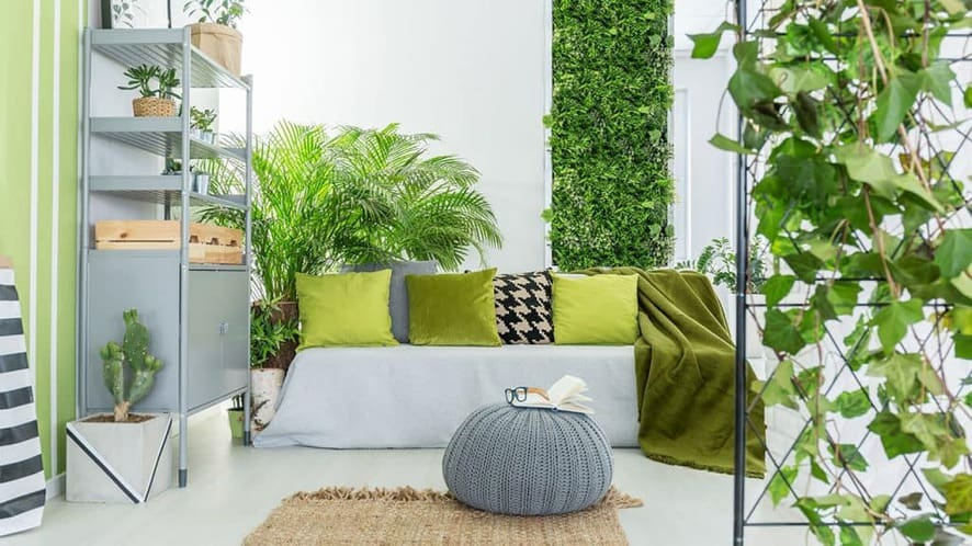 20 Low Maintenance Indoor Plants to Brighten Your Home or Office