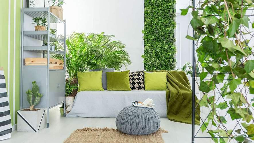 20 Low Maintenance Indoor Plants to Brighten Your Home or Office