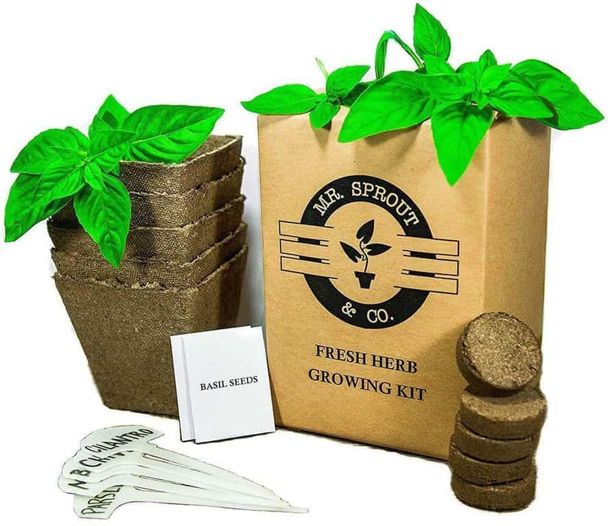 Mr. Sprout & Co. Herb Garden