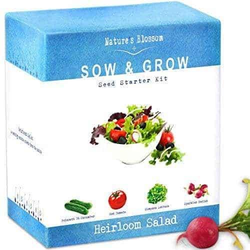 Salad Seed Starter for growing an indoor vegetable garden