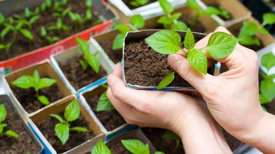 Start an Indoor Vegetable Garden