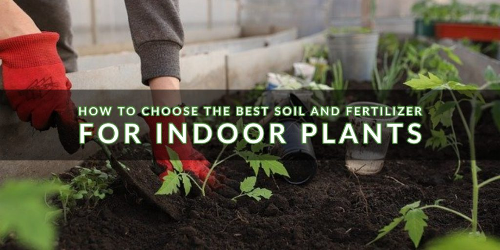 How to Choose the Best Soil and Fertilizer for Indoor Plants