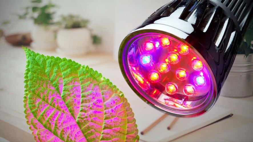 Top 10 Best Clip On Grow Lights for Indoor Plants