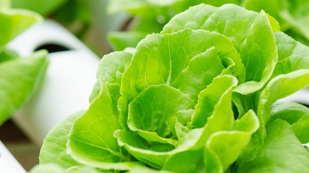 6 Best Hydroponic Systems for Growing Vegetables Indoors