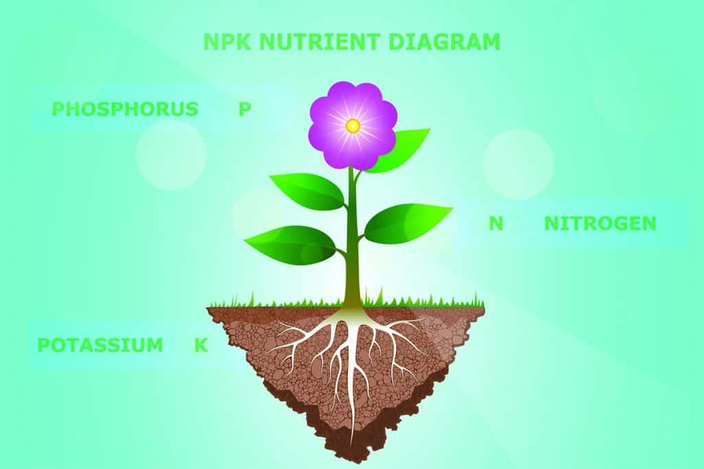 NPK Nutrient System Diagram