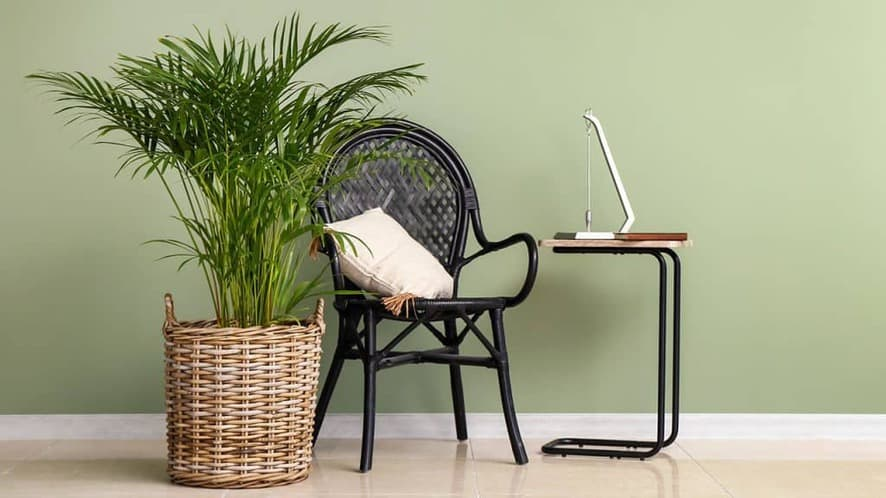 15 Types of Indoor Palm Plants That Are Perfect For Your Home
