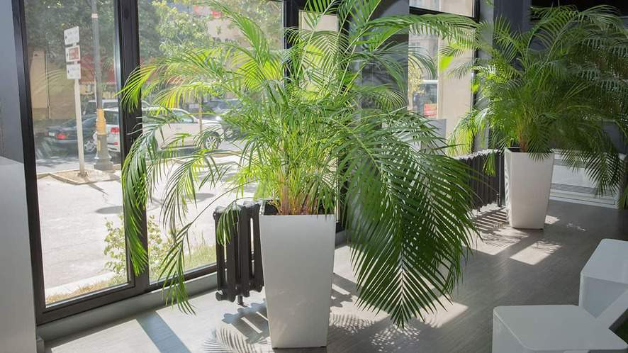 8 Easy Tips on How to Care for Indoor Palm Plants