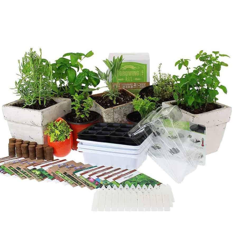 13 Best Indoor Herb Garden Kits Indoor Gardening
