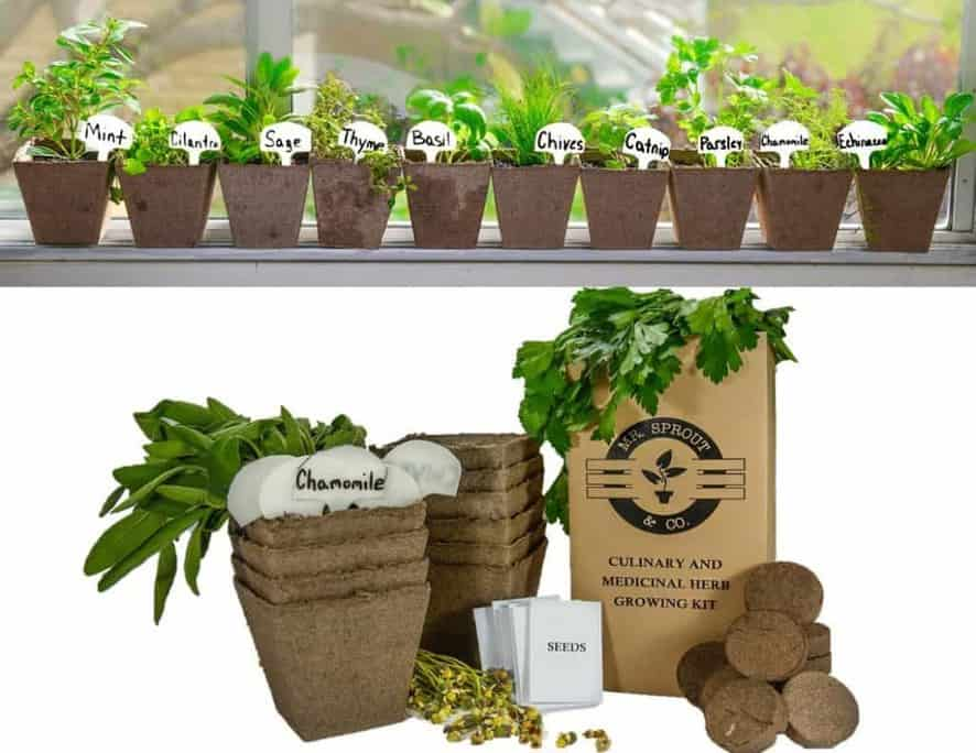13 Best Indoor Herb Garden Kits Indoor Gardening