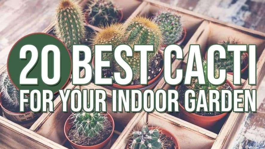 20 Best Cacti for Your Indoor Garden