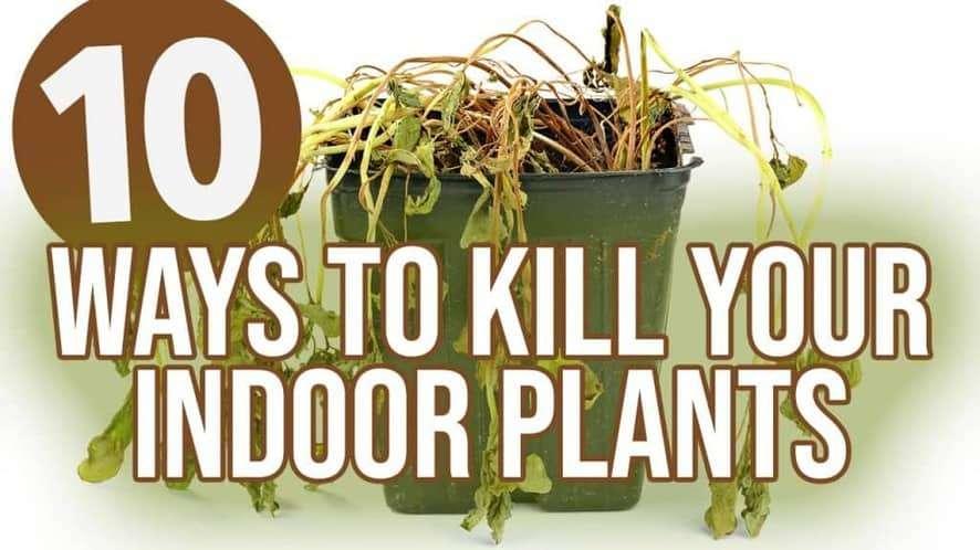 Top 10 Ways to Kill Your Indoor Plants