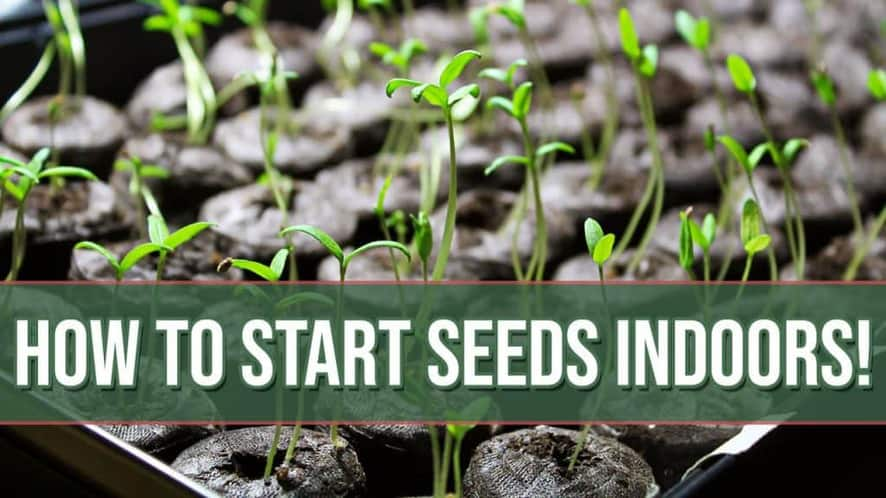 How to Start Seeds Indoors (Everything You Need to Know to Get Started)