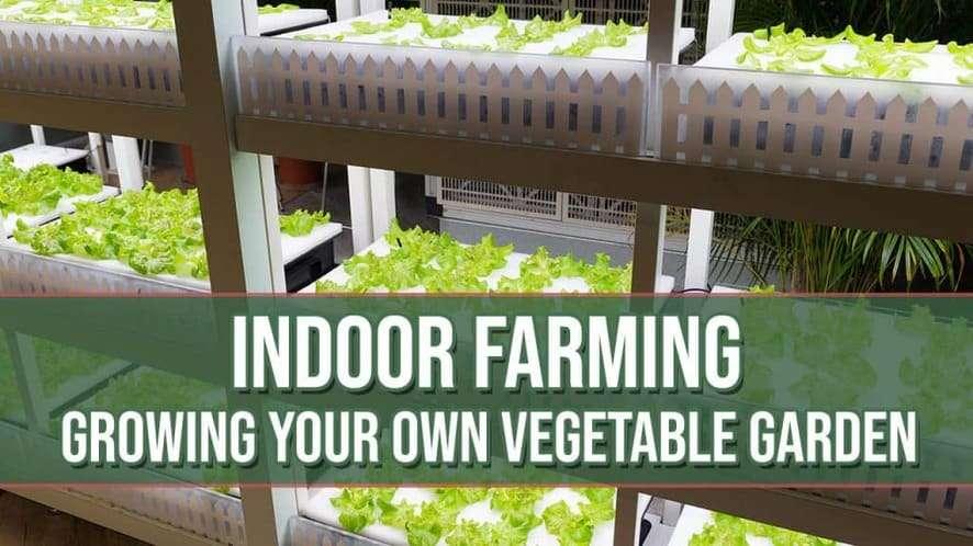 Indoor Farming: Growing Your Own Vegetable Garden