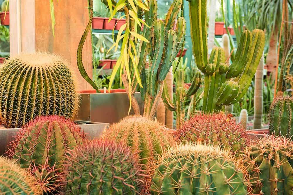 Indoor garden design ideas: cactus garden