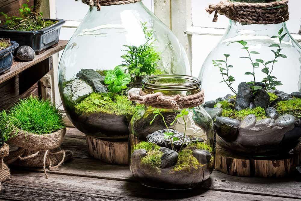Indoor garden design ideas: glass terrariums