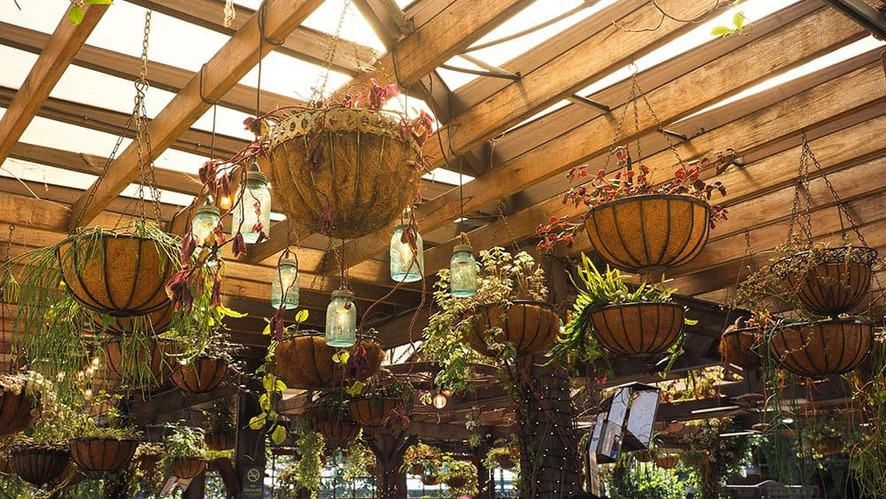 Indoor garden design ideas: hanging baskets