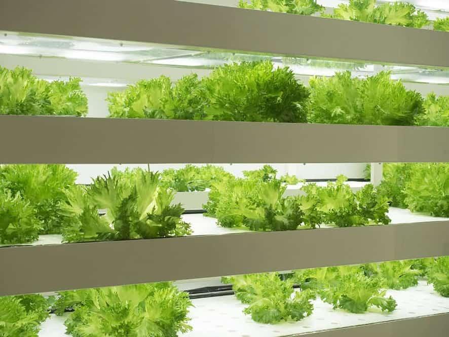 Indoor garden design ideas: hydroponic garden