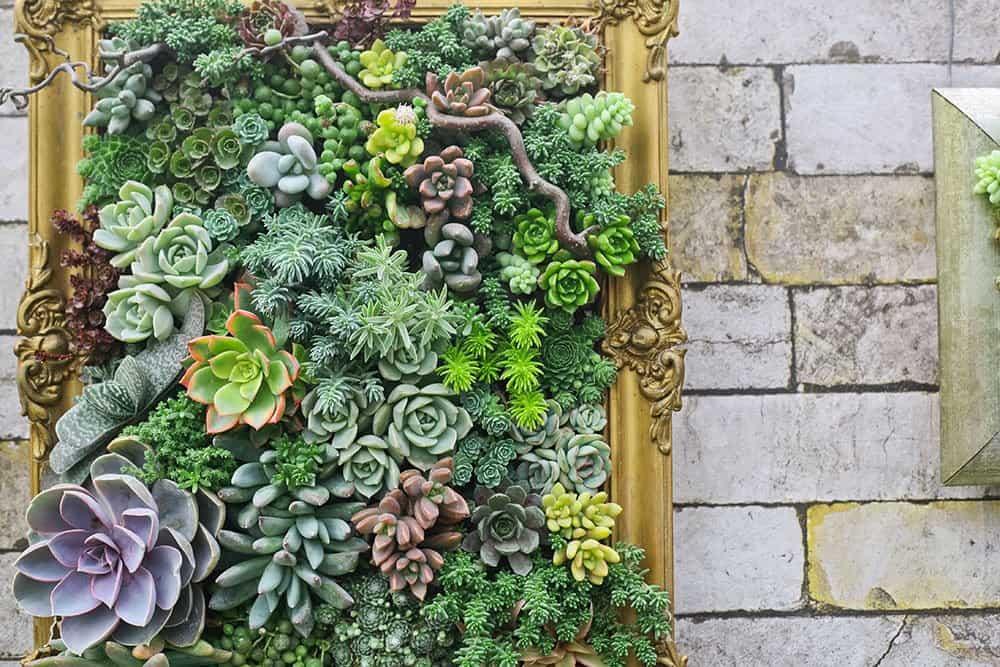 Indoor garden design ideas: living picture