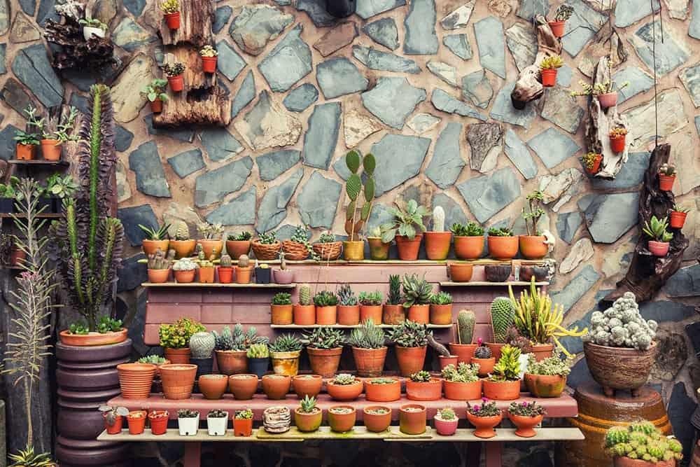 Indoor garden design ideas: matching pots