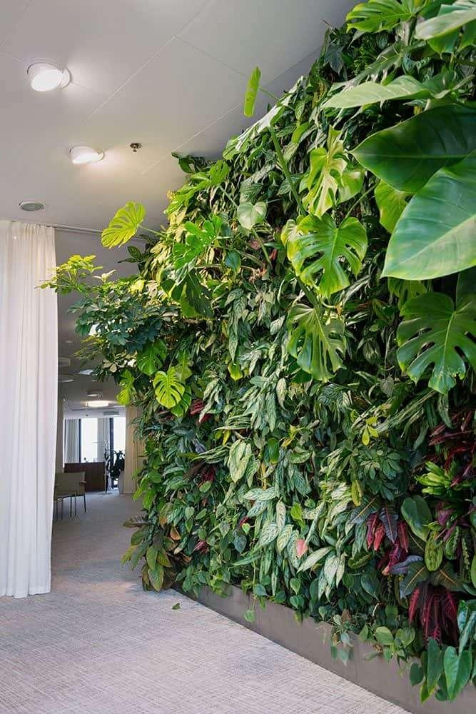 Indoor garden design ideas: vertical garden