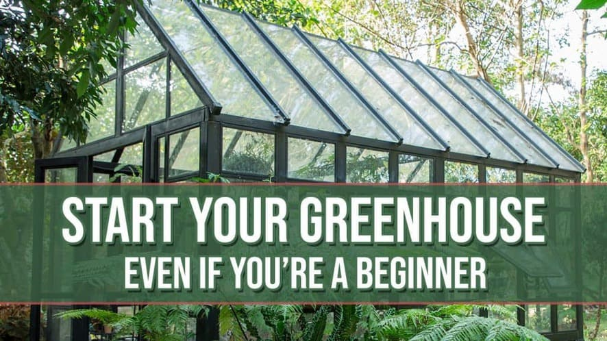 How to Get Your Greenhouse Started (Even If You're a Beginner)