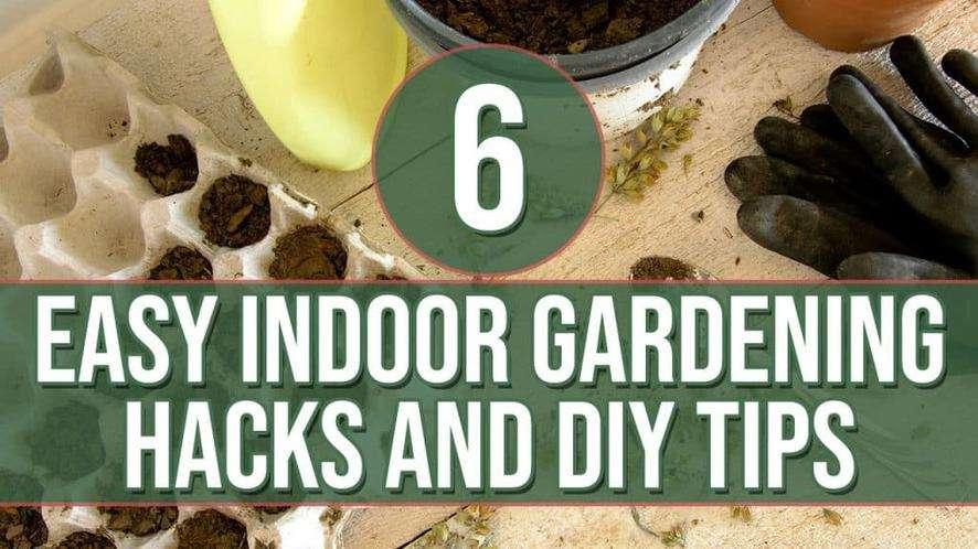 6 Easy Indoor Gardening Hacks and DIY Tips