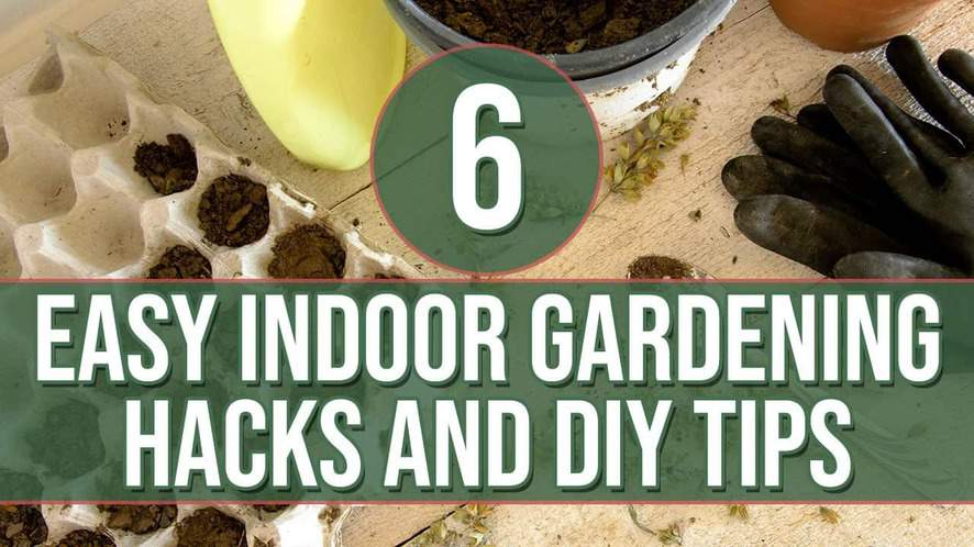 6 Easy Indoor Gardening Hacks and DIY Tips