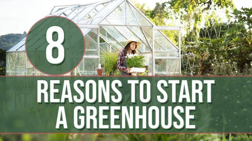 8 Reasons to Start a Greenhouse