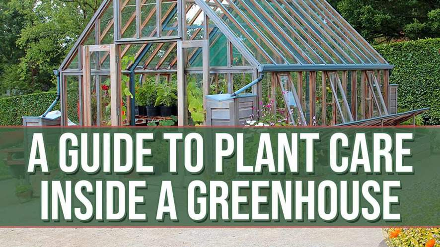 A Guide to Plant Care Inside a Greenhouse