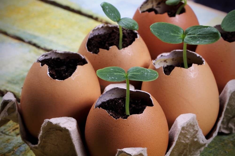 Egg carton seedling planter