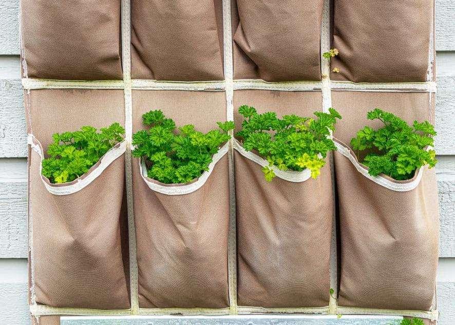 Shoe organizer vertical garden