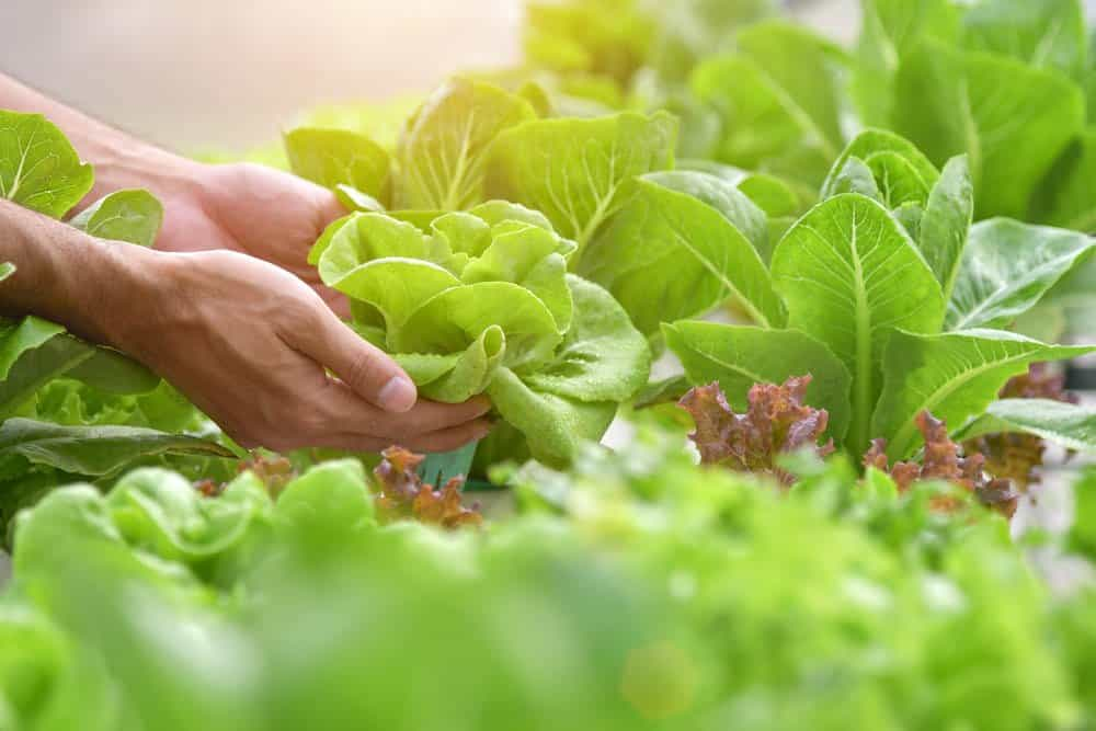 Start a Greenhouse: Save On Groceries