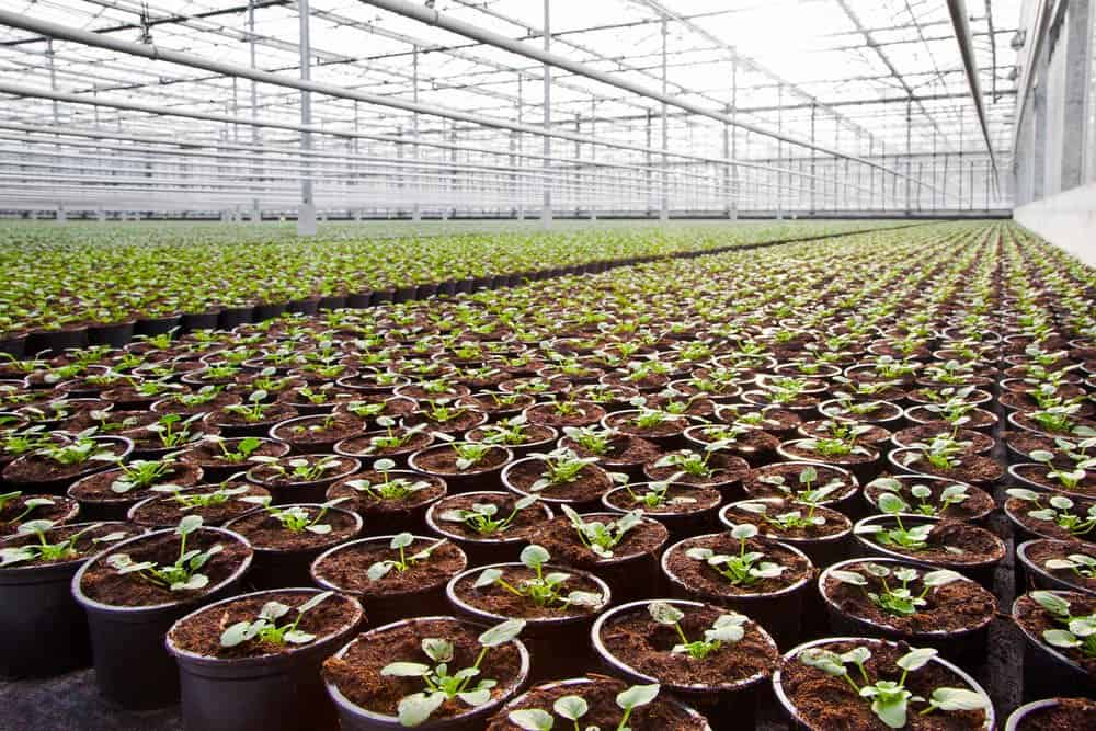 Start a Greenhouse: Space to Expand