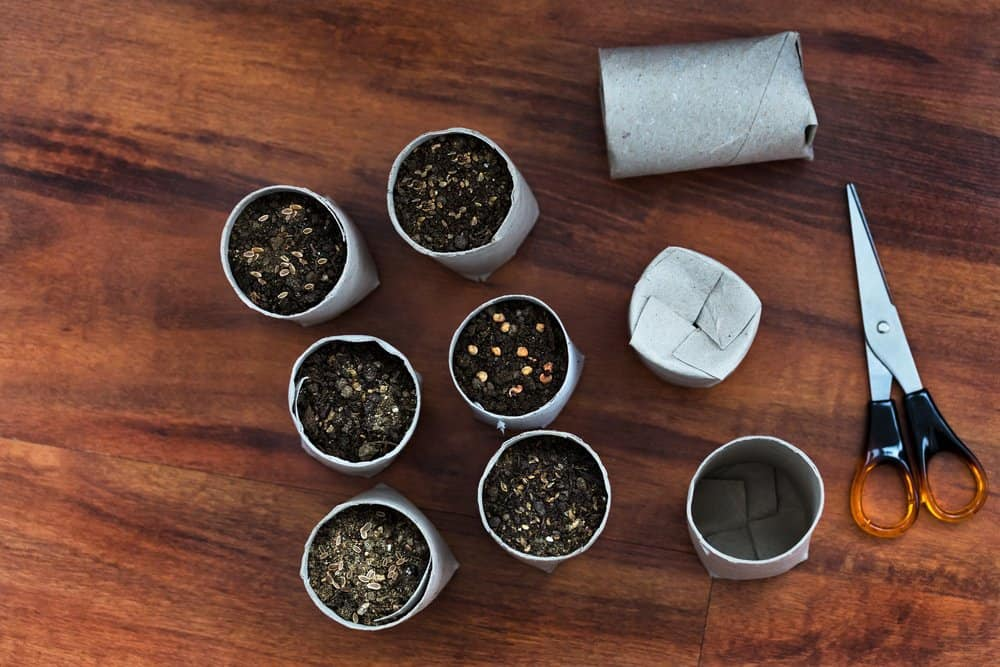 Toilet paper roll seed planter