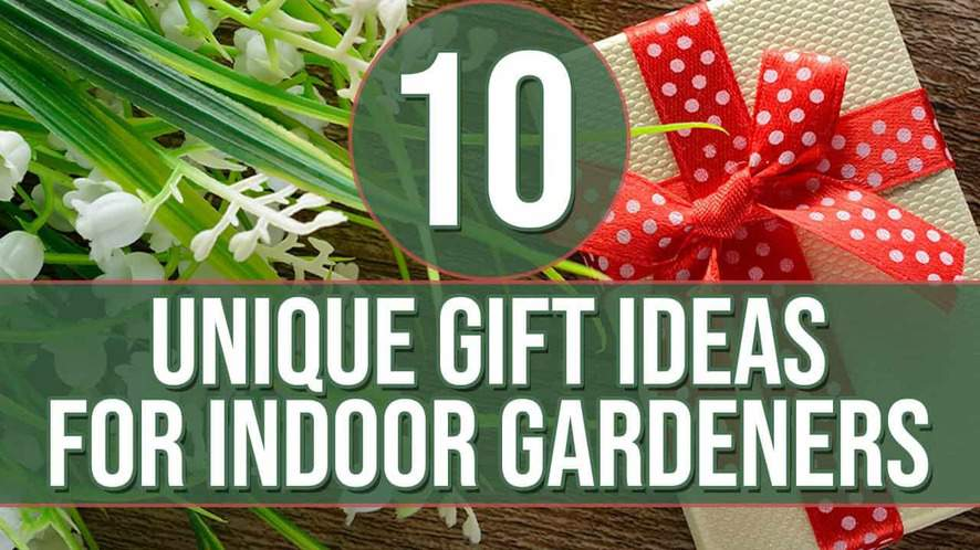 10 Unique Gifts for Indoor Gardeners