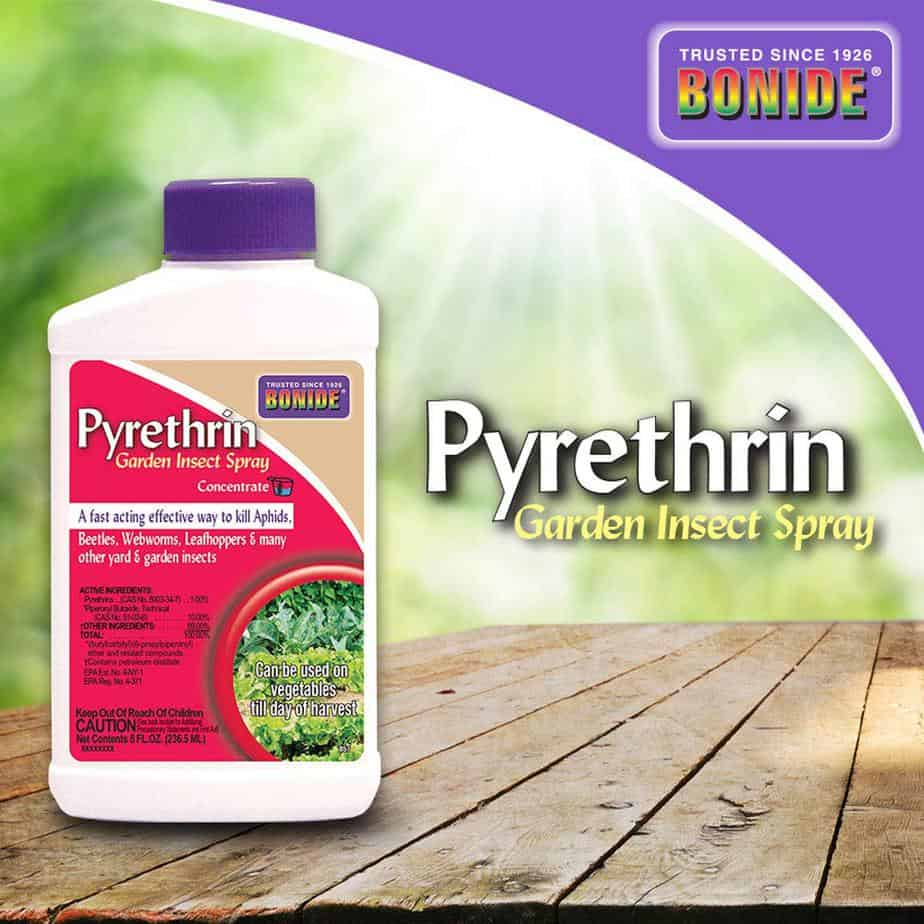 Bonide Pyrethrin Insect Spray