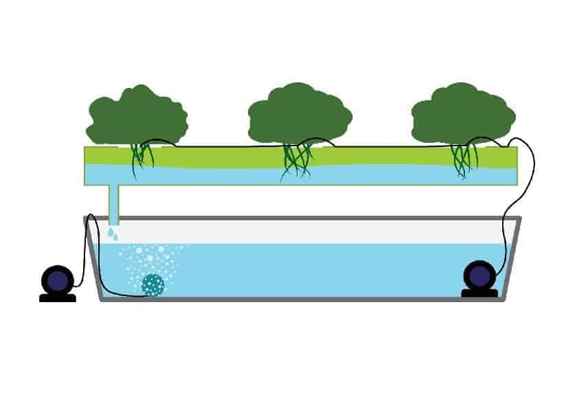 Hydroponics for Beginners - Ebb and Flow