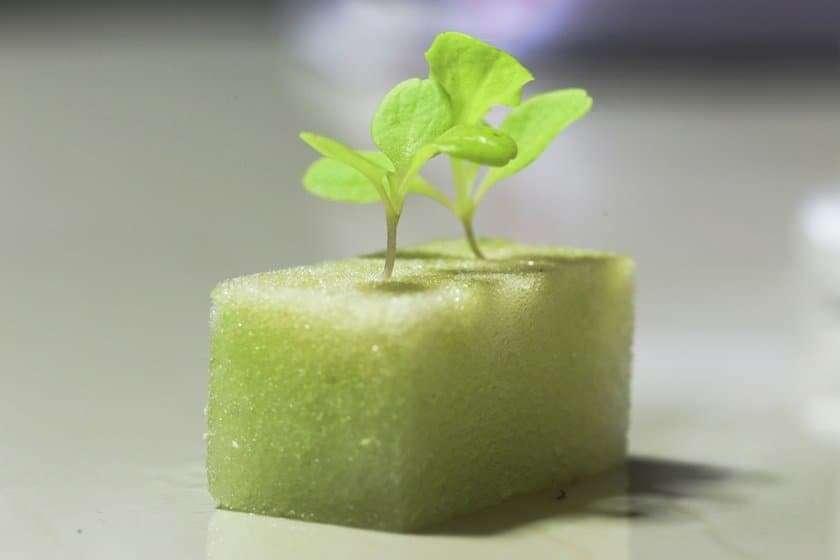 Hydroponics for Beginners - Seedling