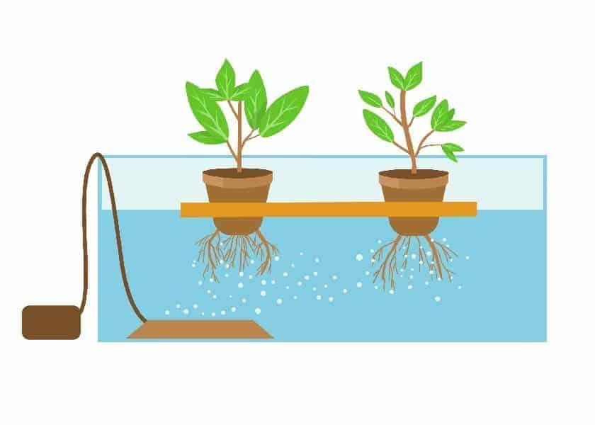Hydroponic Water Culture