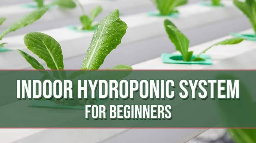 Indoor Hydroponic System for Beginners (What You Need and Why)