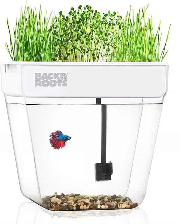 The Best Aquaponics Kits - Back to the Roots Mini Aquaponic Ecosystem