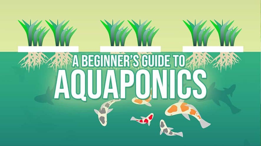 A Beginner's Guide to Aquaponics