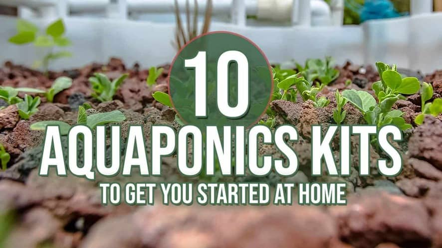 Top 10 Aquaponics Kits to Get You Started at Home