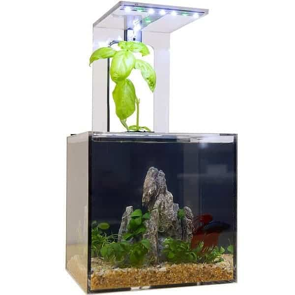 The Best Aquaponics Kits - EcoCube Aquarium Aquaponics System
