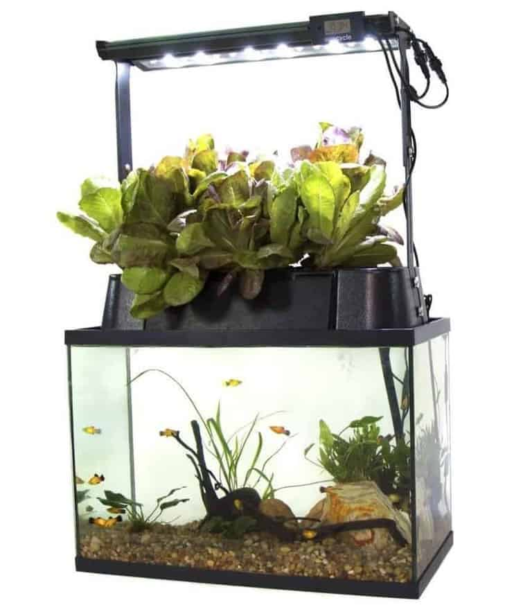 Ecolife Aquaponics Indoor Garden System
