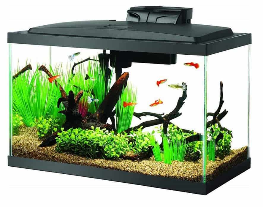 Aquaponics for beginners - Fish Tank